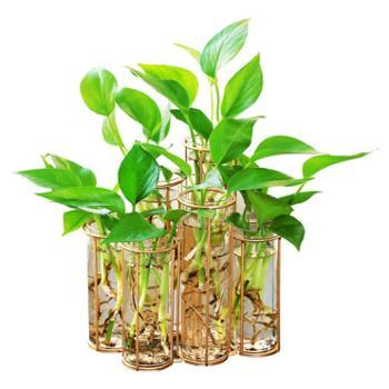 创意欧式绿萝花瓶玻璃容器客厅插花花器装饰品摆件水培植物玻璃瓶
