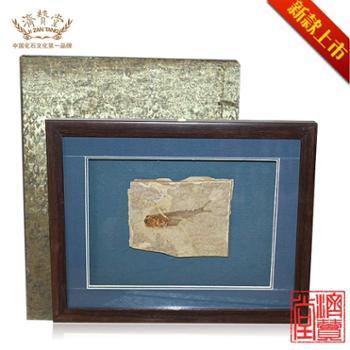 济赞堂鱼化石H1