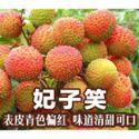 【家庭装】 妃子笑荔枝 5斤装 新鲜当季水果应季5斤装