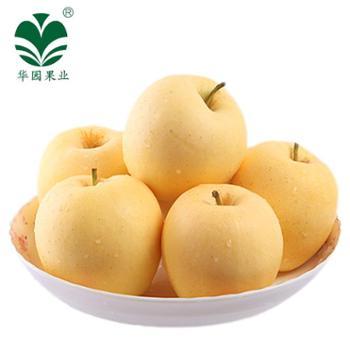 【华园】甘肃特产黄金帅苹果家庭装10斤