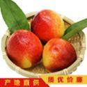 脆甜黄油桃果园现摘5斤装 黄心桃非蟠桃水蜜桃