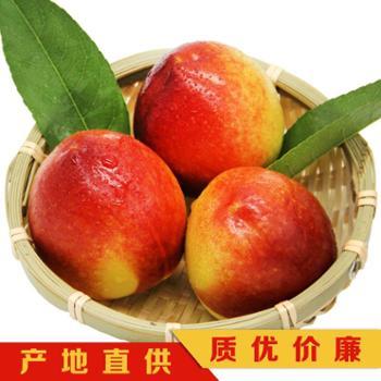 脆甜黄油桃果园现摘5斤装黄心桃非蟠桃水蜜桃
