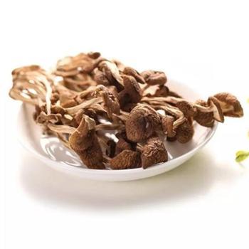 松桃茶树菇(500g)—食疗营养滋补理想产品!