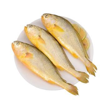 大洋世家国产小黄鱼400g*2