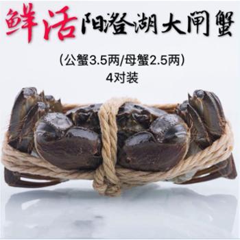 土皇后阳澄湖大闸蟹A8688型公3.5两/母2.5两(4对装)公母可指定