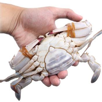 摩时渔鱼舟山超低温冷冻小娘蟹3斤装约12个左右
