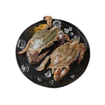 摩时渔鱼舟山野生鲜活梭子蟹3斤6-8只