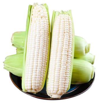 荆裕优选 云南牛奶玉米独立包装可生吃 6根